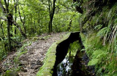 Madeira a část cesty vedoucí podél levadas